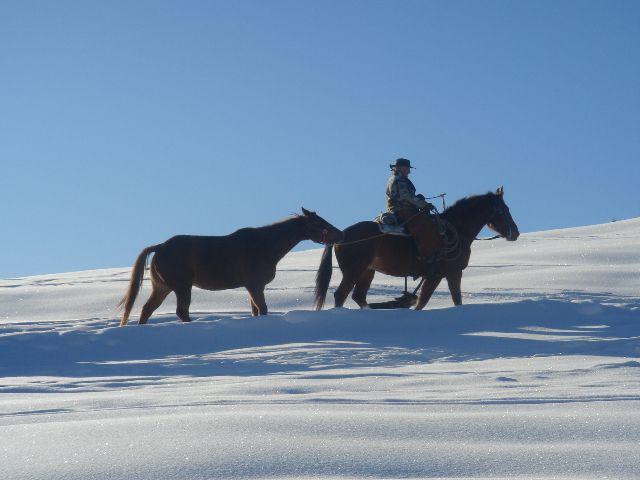 Ein Pferd kehrt heim