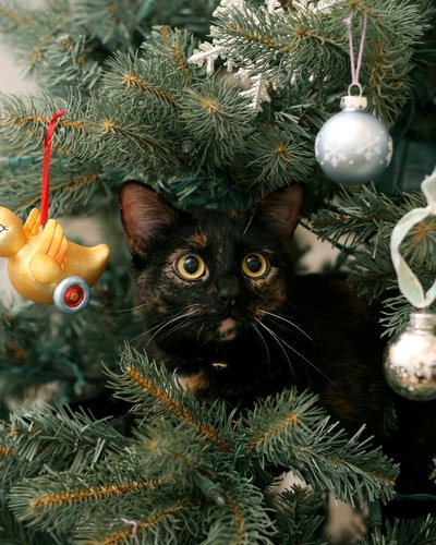 fragile ornaments especially those made of glass may be broken and ingested as can the ribbon hooks or wire holding the ornaments on the tree - Black Cat Christmas Tree Decoration