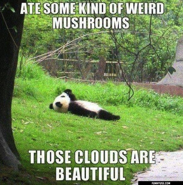 Ate some kind of weird mushrooms Those clouds are beautiful  Funny Pictures