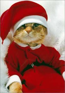 gato vestido pai Natal