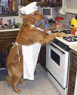 Chef cozinha - Cão Bobi