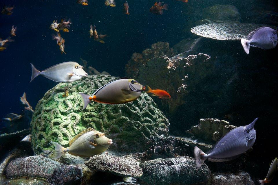 My Aquarium Journey In Malaysia Asia 39 S Largest Public