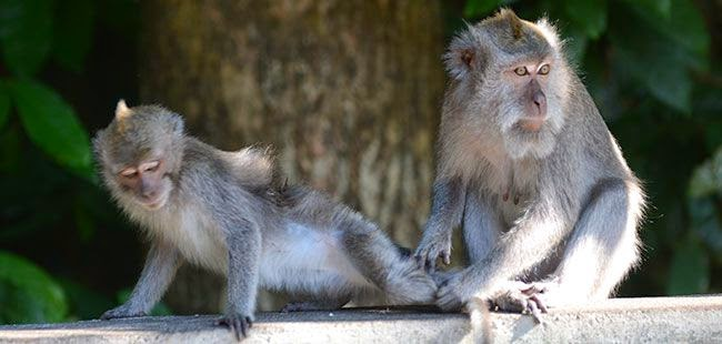 Hutan Monyet Alas Kedaton