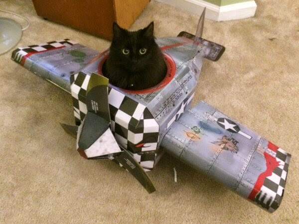 Funny cats - part 99 (40 pics + 10 gifs), cat pictures, cat sits on cardboard airplane
