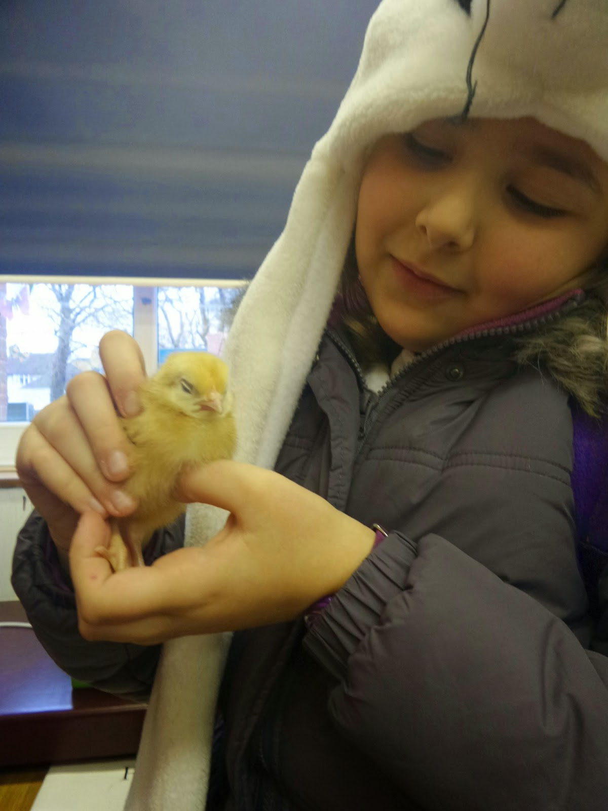 Top Ender holding a Little Baby Chick