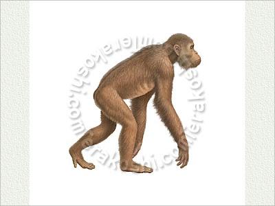 primates prehistoricos Dryopithecus
