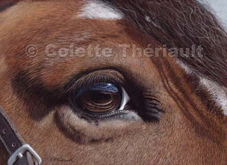 horse drawing by award winning artist Colette Theriault