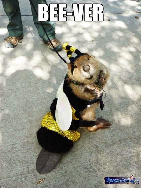 funny animals costumes humor