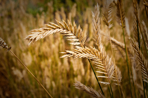 The quot truth quot the tares amp the wheat 101 blog