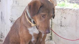 Δύο χρόνια  ψάχνει ο Choco μία οικογένεια! Ποιος θα του δώσει την αγάπη που χρειάζεται?