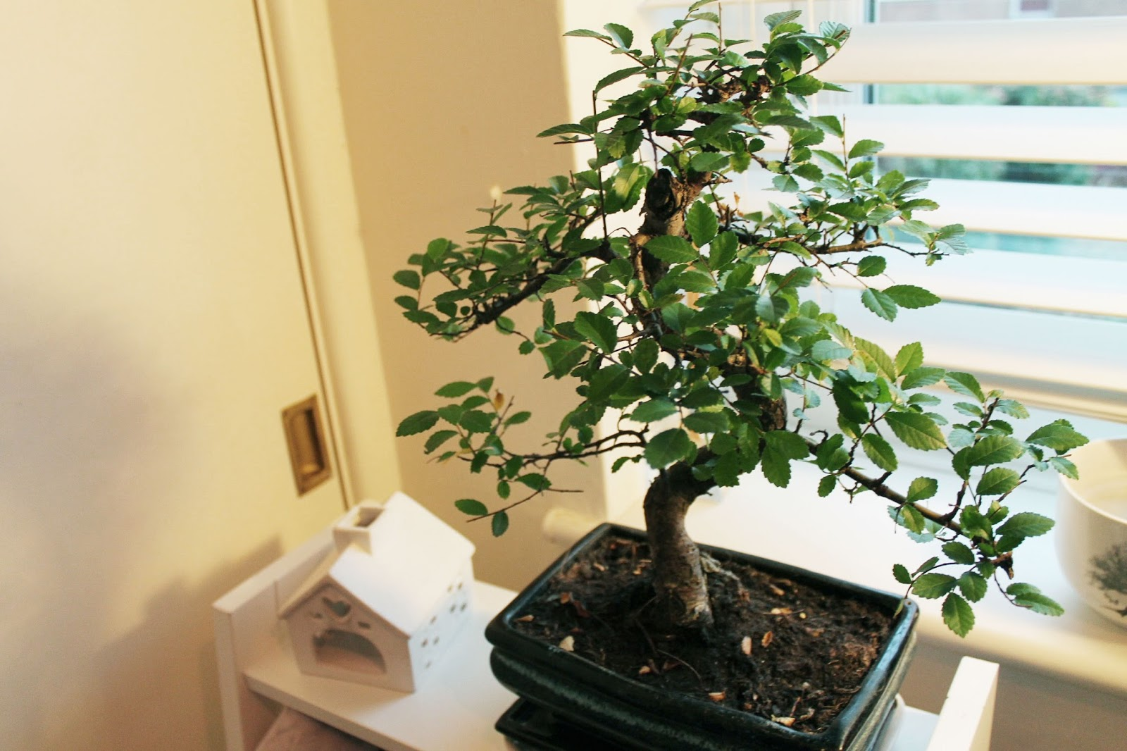 ROSE LIFESTYLE BLOG Interiors Zelkova Bonsai Amp Marie Kondo39s