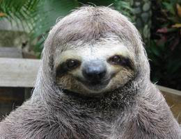 Chitika Insights Special Report: Sloths Generate More Search Traffic than Facebook