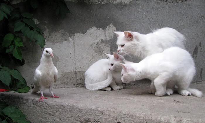 koleksi gambar kucing yang menarik weird n fun ideas