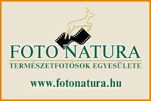 FOTO NATURA
