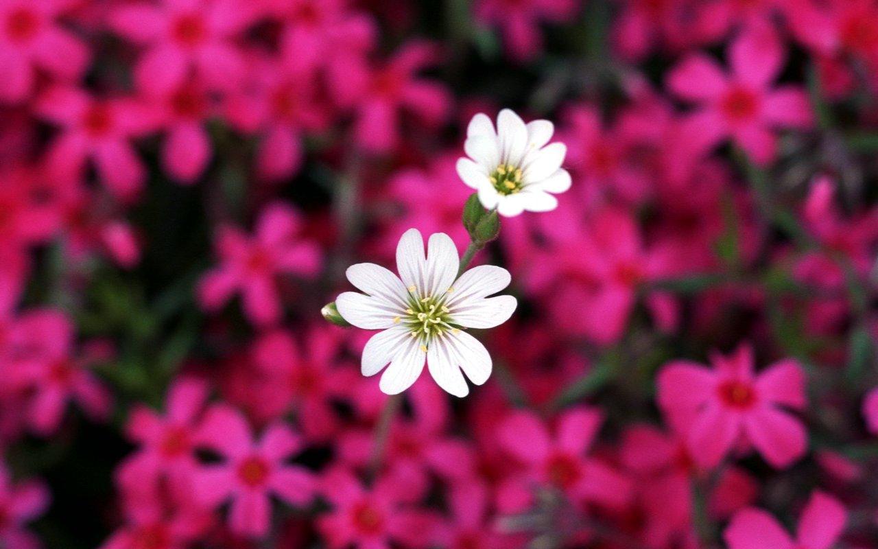 Hd Wallpapers Of Beautiful Flowers Hdwallpapersdownload8spot