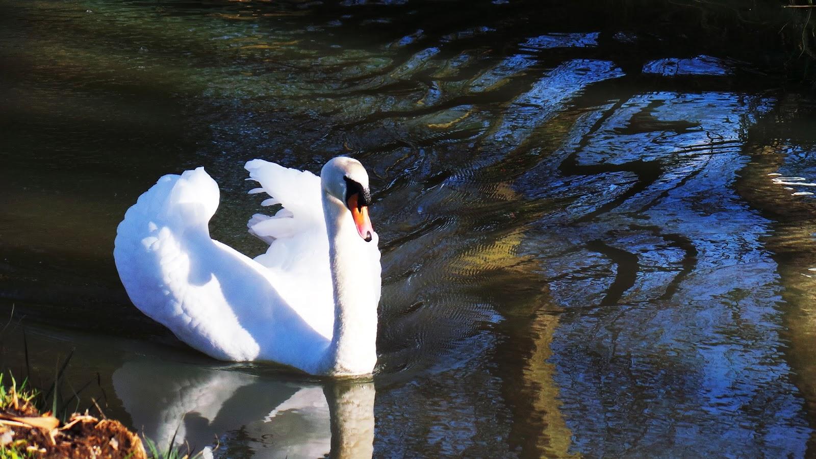 Review / Blog Billing Aquadrome Holiday Park, Northamptonshire
