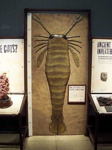 Pterygotus,Kalajengking Laut Sepanjang 2 Meter