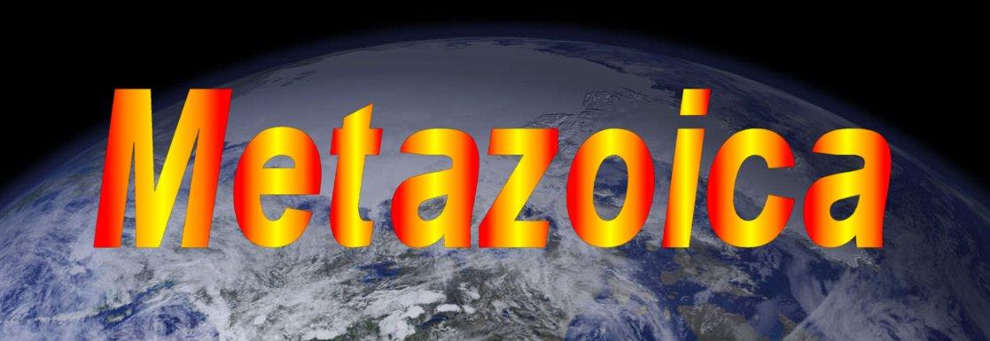 Metazoica