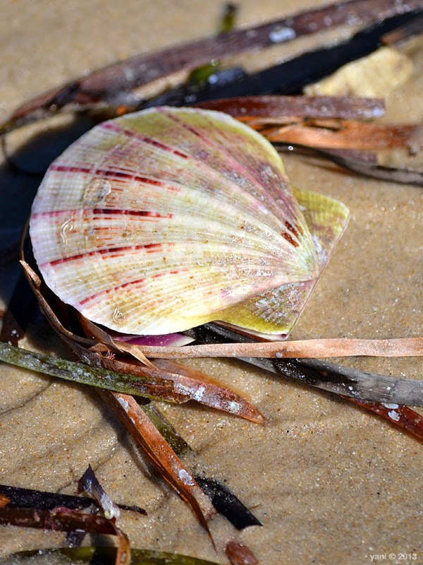 shell weeds