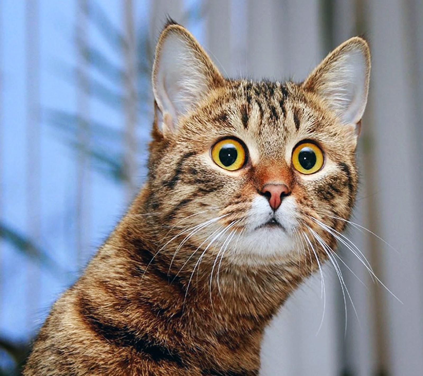 imagenes animales graciosas - Todo Mascotas: Imágenes graciosas de Animales y Mascotas