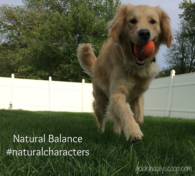 Celebrating Pets' unique characters with Natural Balance dog food