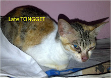 Tongget Always In Our Mind