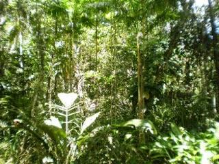 Reserva de plantas exóticas.