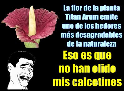 flor-apestosa-hedor