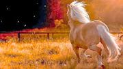 Beautiful Horse HD