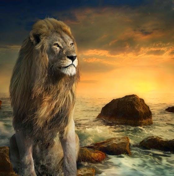 Singa tepi laut