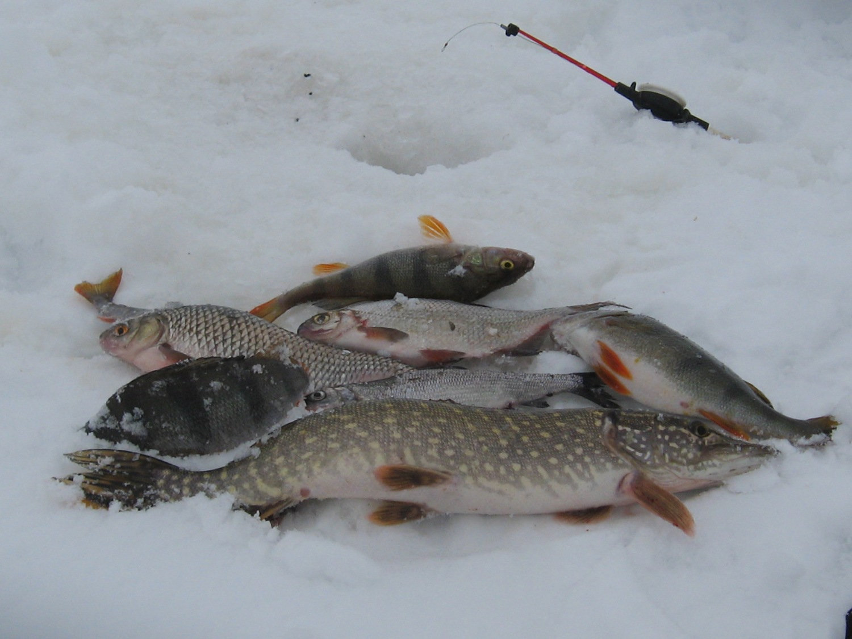 Зимняя рыбалка запрещена на зимовальных ямах