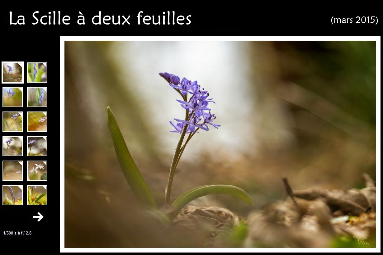 http://instantalautre.free.fr/galeries2015/scille/