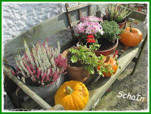 Herbstlich!!