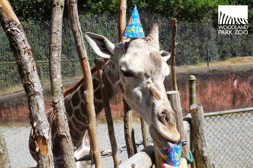 Giraffe Wearing Hat