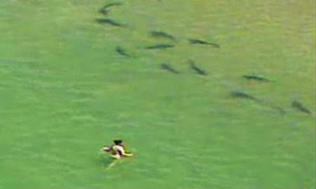 Bambina di 2 anni cade dalla Yacht. i genitori non si accorgono e viene adottata da una famiglia di squali. La storia che ha commosso il web