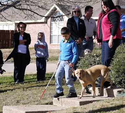 boy with cane and yellow Lab on leash walk down steps