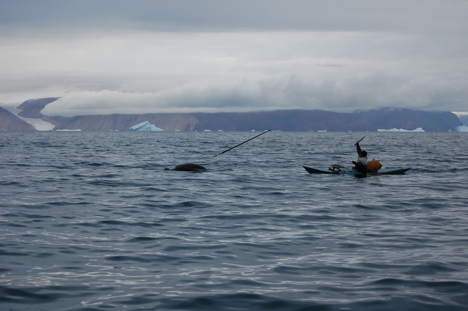 thoughts and feelings about narwhal hunting This is because when we assess ourselves for irrationality, we look inward, searching through our thoughts and feelings for bias but biases operate unconsciously, so while we have little trouble pointing out the biases in others, it is exceedingly difficult for us to take note of our own.