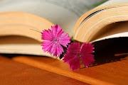 San Jordi, un Libro y una Rosa. (libro una rosa flor silvestre como un detalle de marcador)