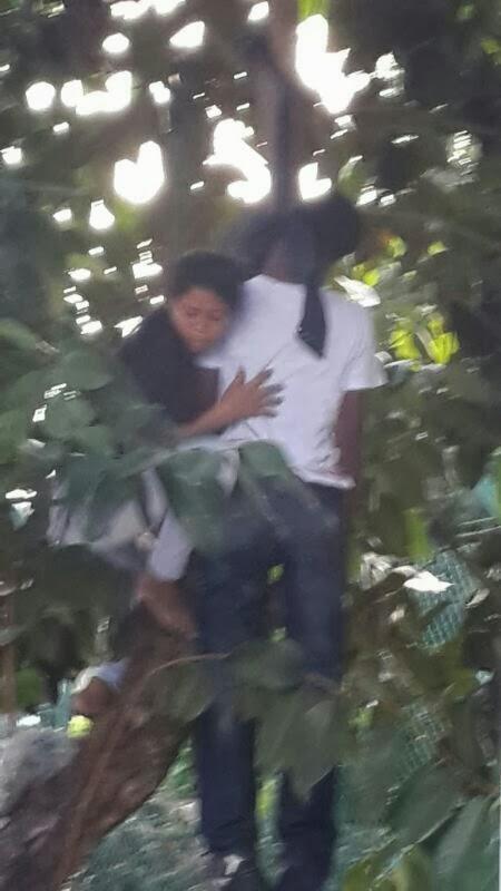 penang terkini foto bunuh diri gantung di pokok kerana