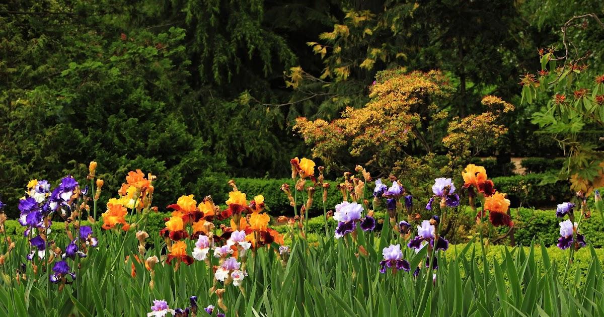 Arte y jardiner a dise o de jardines lirios iris for Diseno de jardines 3d 7 0 keygen