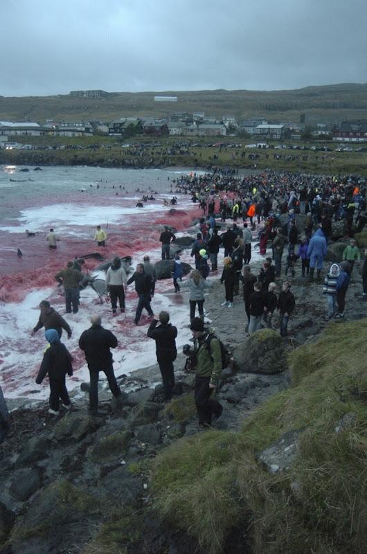 تخيلت يوما هناك بحرا الدماء؟