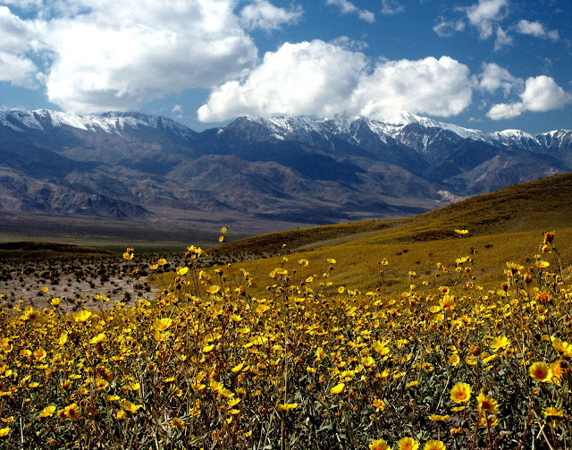 Death Valley in bloom.