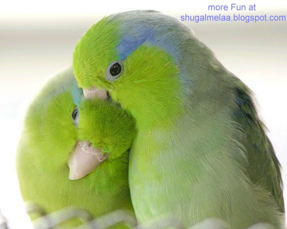 Two Lovely Parrots Wallpaper