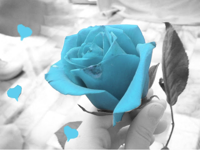 friendship-rose-blue-image