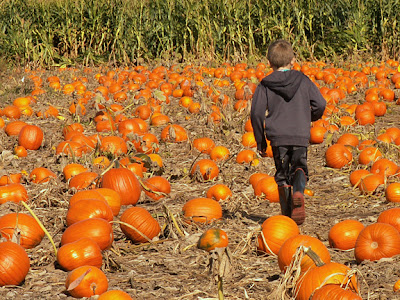 my son in the pumpkin patch
