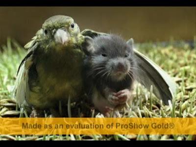 Imagenes tiernas de animales