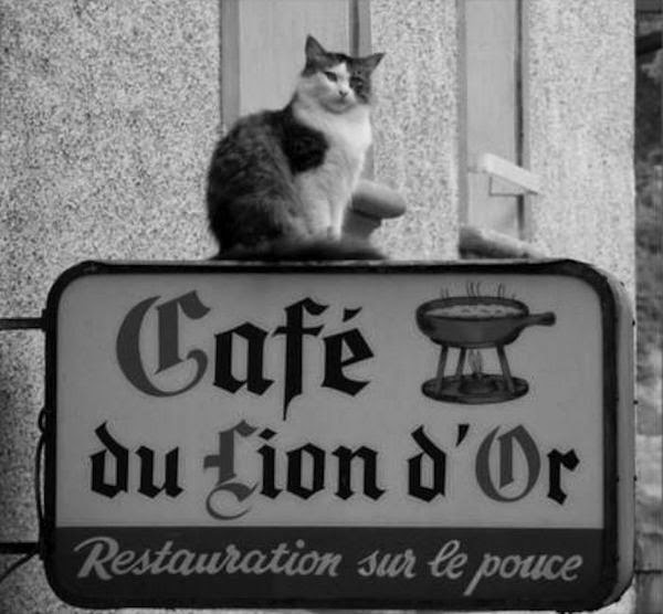 chat cafe lion paris