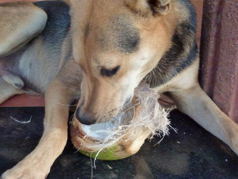 how to eat a coconut
