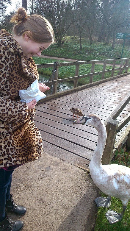 Kent swan