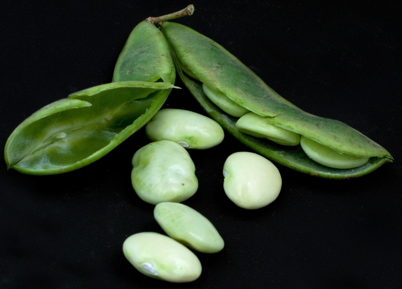 Blog fuad informasi dikongsi bersama 10 everyday fruits and vegetables that are poisonous for How to cook fresh lima beans from garden